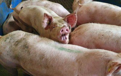 Warum das Tierwohlsiegel keine Lösung ist