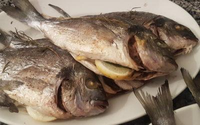 Fisch – das bessere Fleisch?